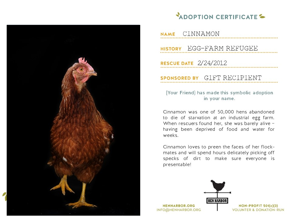 be a chicken champ - Your sponsorship or donation allows us to continue to rescue, rehabilitate and provide life-long care for birds-in-need. For $10 - $15 a month, we'll mail you a sponsorship certificate of your chosen bird in the mail -- either for yourself or as a gift for a friend. Email us any time to check in on your feathery friend!You can also make a one time, tax-deductible donation. Because Hen Harbor is volunteer-run, every dollar goes directly to bird-care.