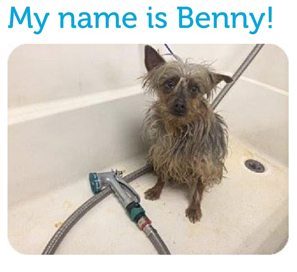 THIS IS THE MA  IN PH  OTO FROM BENNY'S ADOPTAPET.COM AD.  THOSE SOULFUL EYES SUCKED ME IN!