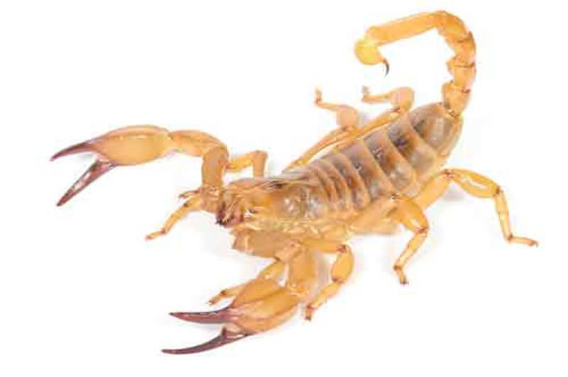 Scorpions-1.jpg