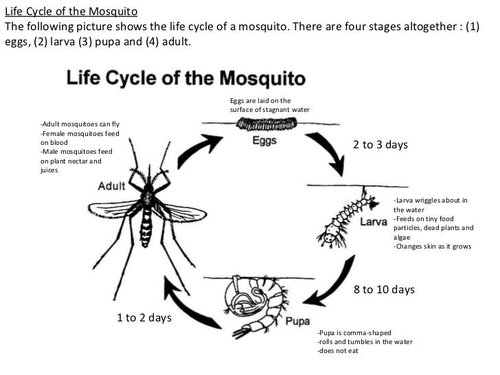 Tips To Avoid Mosquito Bites Mighty Mosquito Control