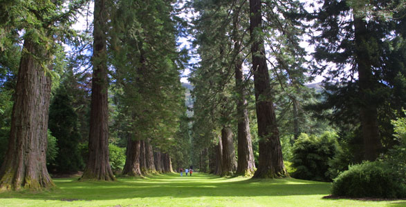 benmore gardens