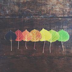 56b2ccfea6e9ee7dec7b43278d340a06--fall-lineup-aspen-trees.jpg