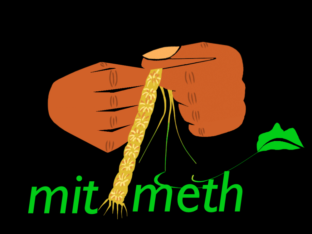 MitiMeth LOGO2018.jpg