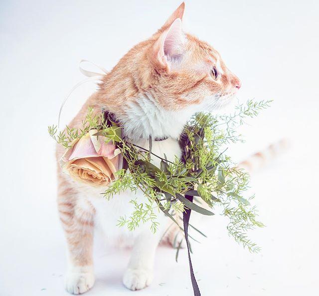 Cat + flower collar = 😍