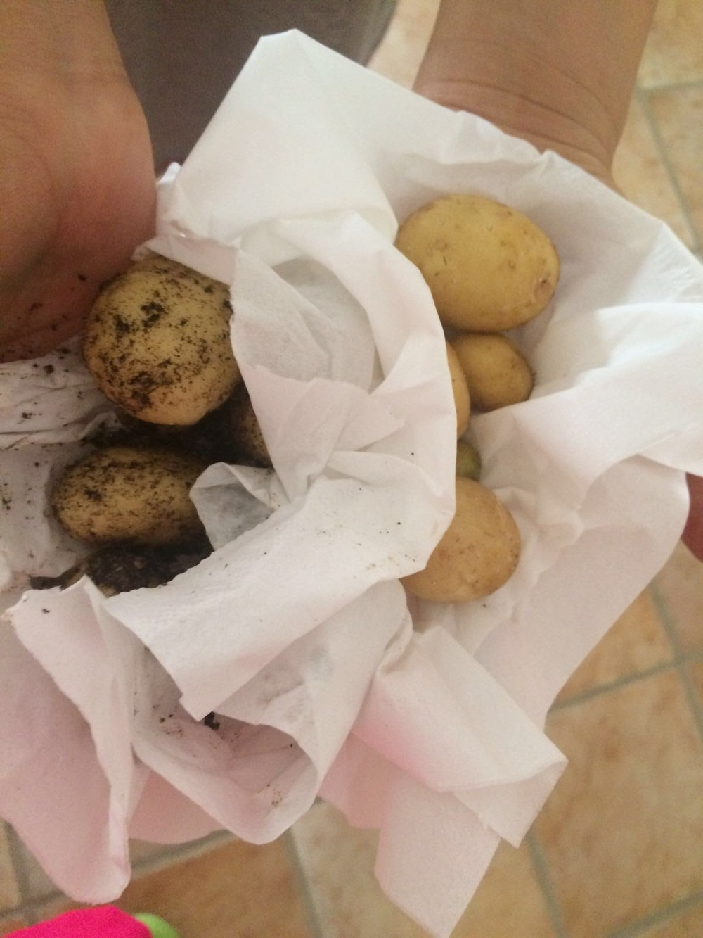 potato 3.jpg