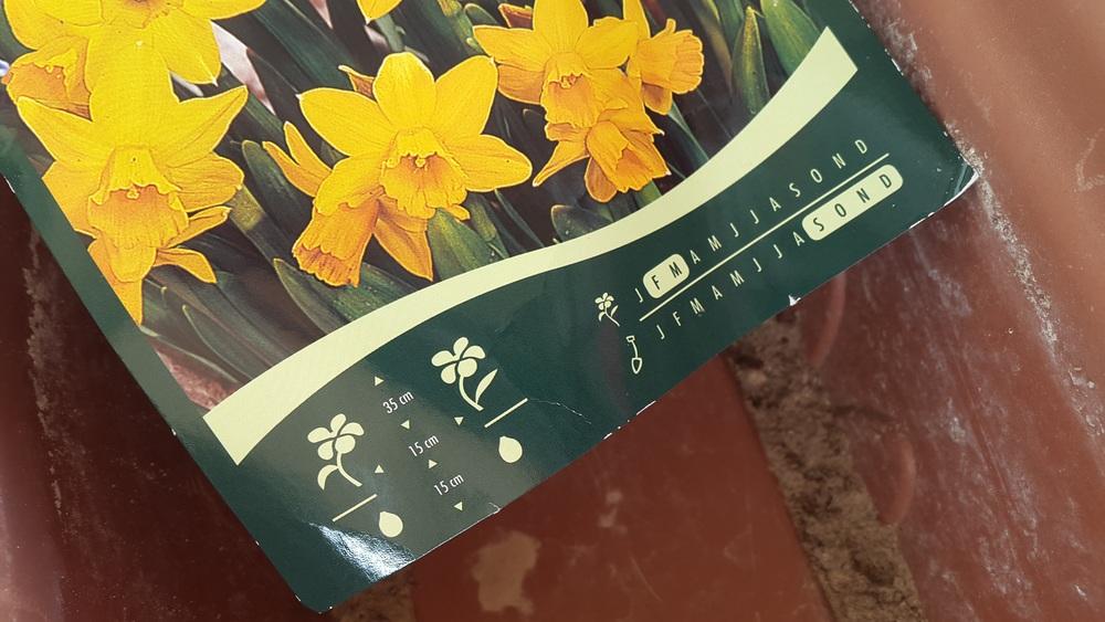flower seeds.jpg