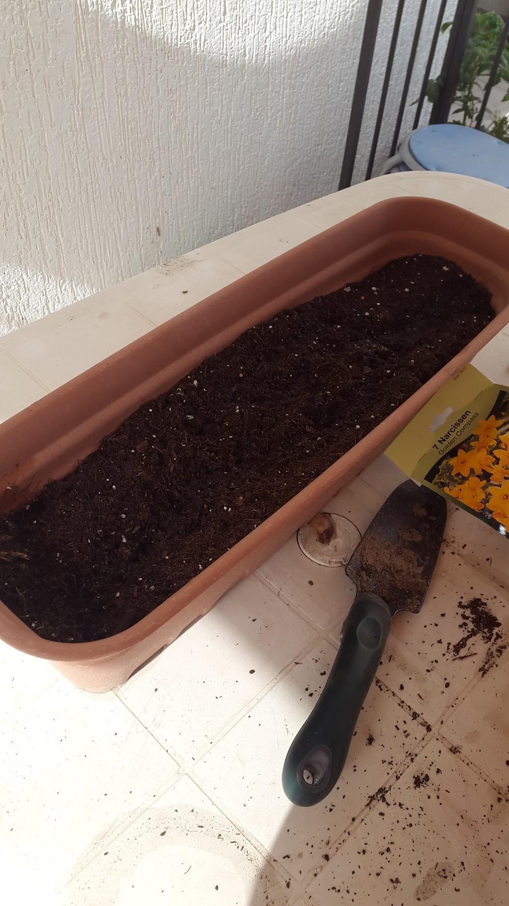 planting final 3.jpg