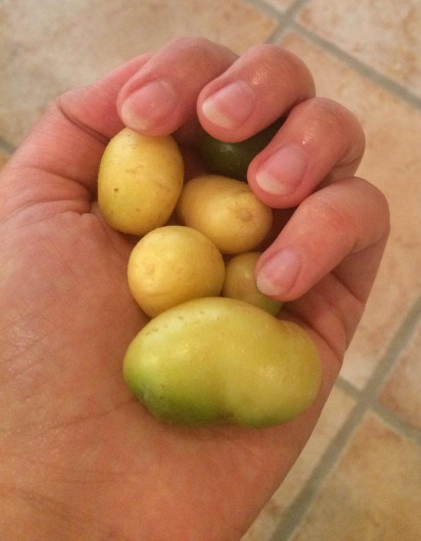 potato 2.jpg