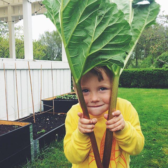 """#Repost @oprofessionells ・・・ """"Plockat barbarder mamma!"""" Okaj, dags för paj 🍀🍪 Egen mat i trädgården, vilken grej! #ikeahållbaraihop #nuodlarvi"""