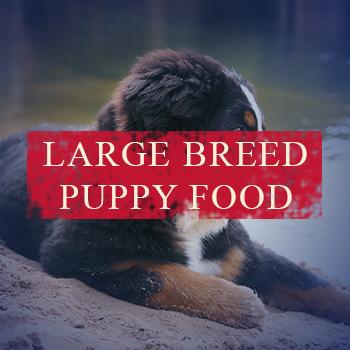 large-puppy.jpg