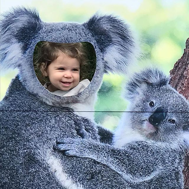 My little 🐨