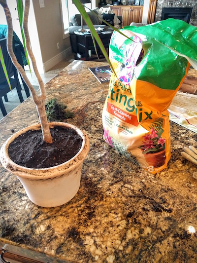Now you can repot.  You can totally use the soil that was already in there, however you will still need some new soil to fill up the space you just created by clipping off all those roots.