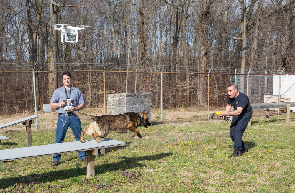 Enjoying some aerial work with Officer Fred Bates and K-9 Gunny of the RPD. Click to enlarge.