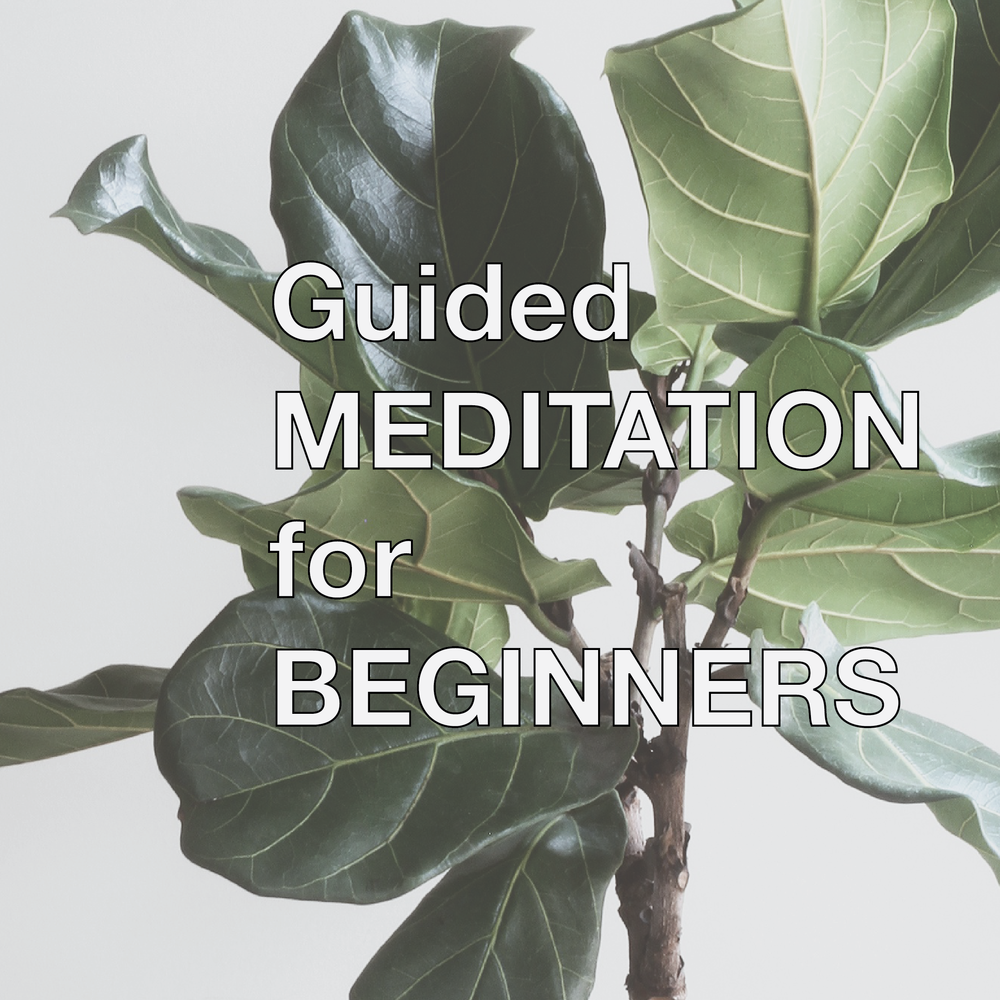 Guided Meditation for Beginners - A short EASY guided meditation to help you get started with meditation!