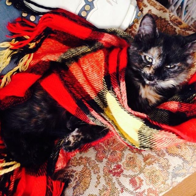 Just got home from singing harmonies with @thisisthetinman - it was an excellent atmosphere ❤ I didn't take any pics of the show, stage or audience, so I bring you Chicken when she was a kitten #chickenthekitten wrapped in my scarf a few years back. It's cold, party with us next time. Xoxo ❤️
