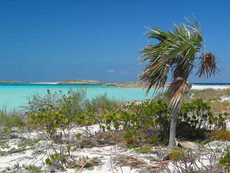 Bahamas24-119-800-600-80.jpg