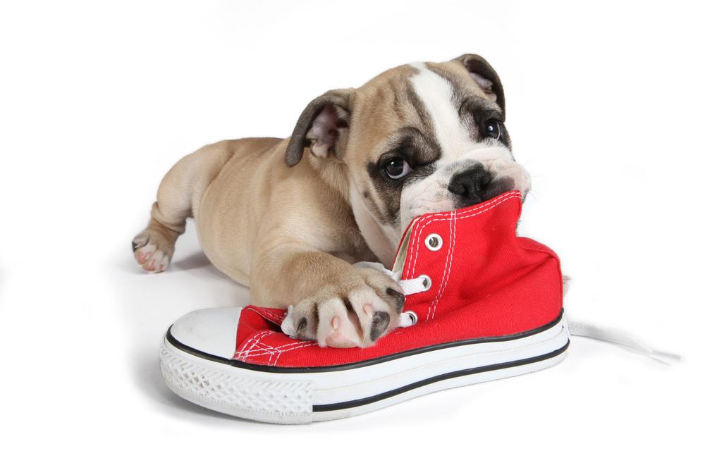 best dog trainer in austin, texas