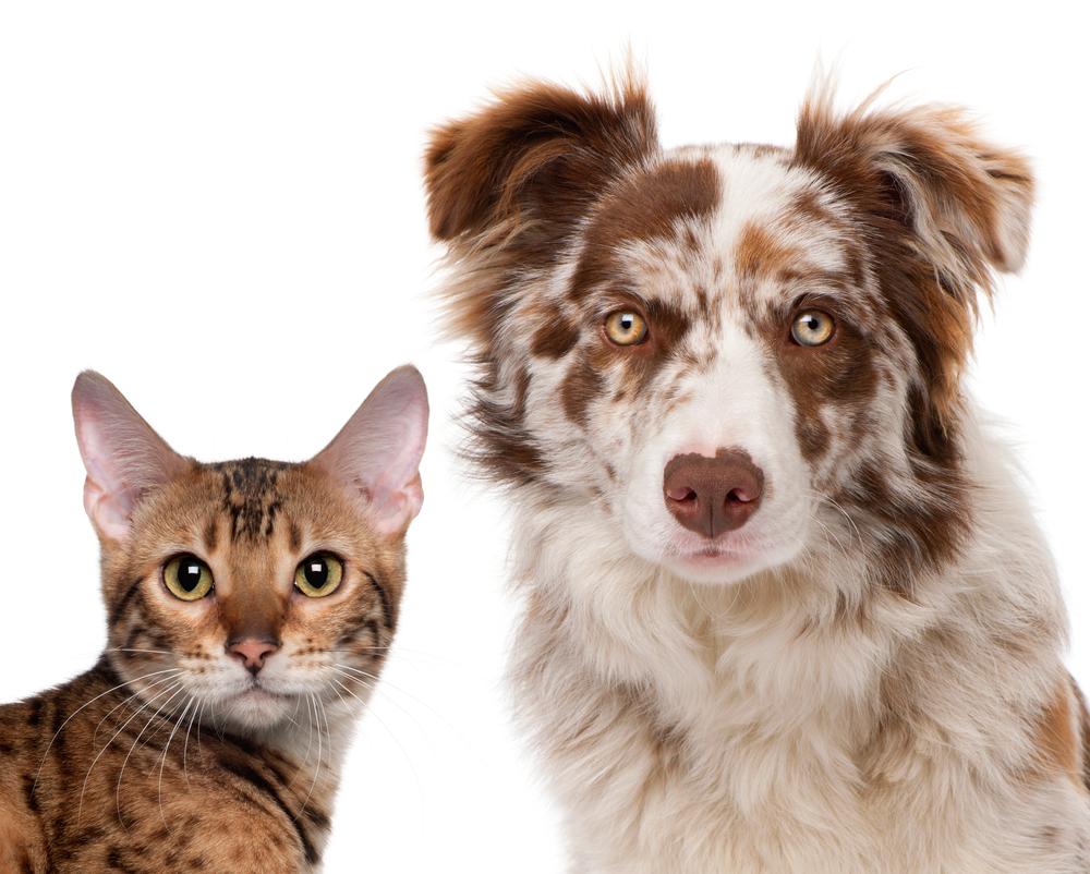 veterinary behaviorist dog aggression and cat aggression