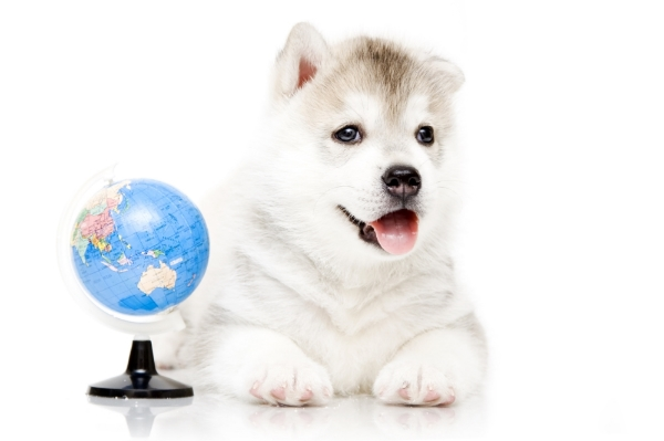 long-distance remote behavior consultation with a veterinary behaviorist