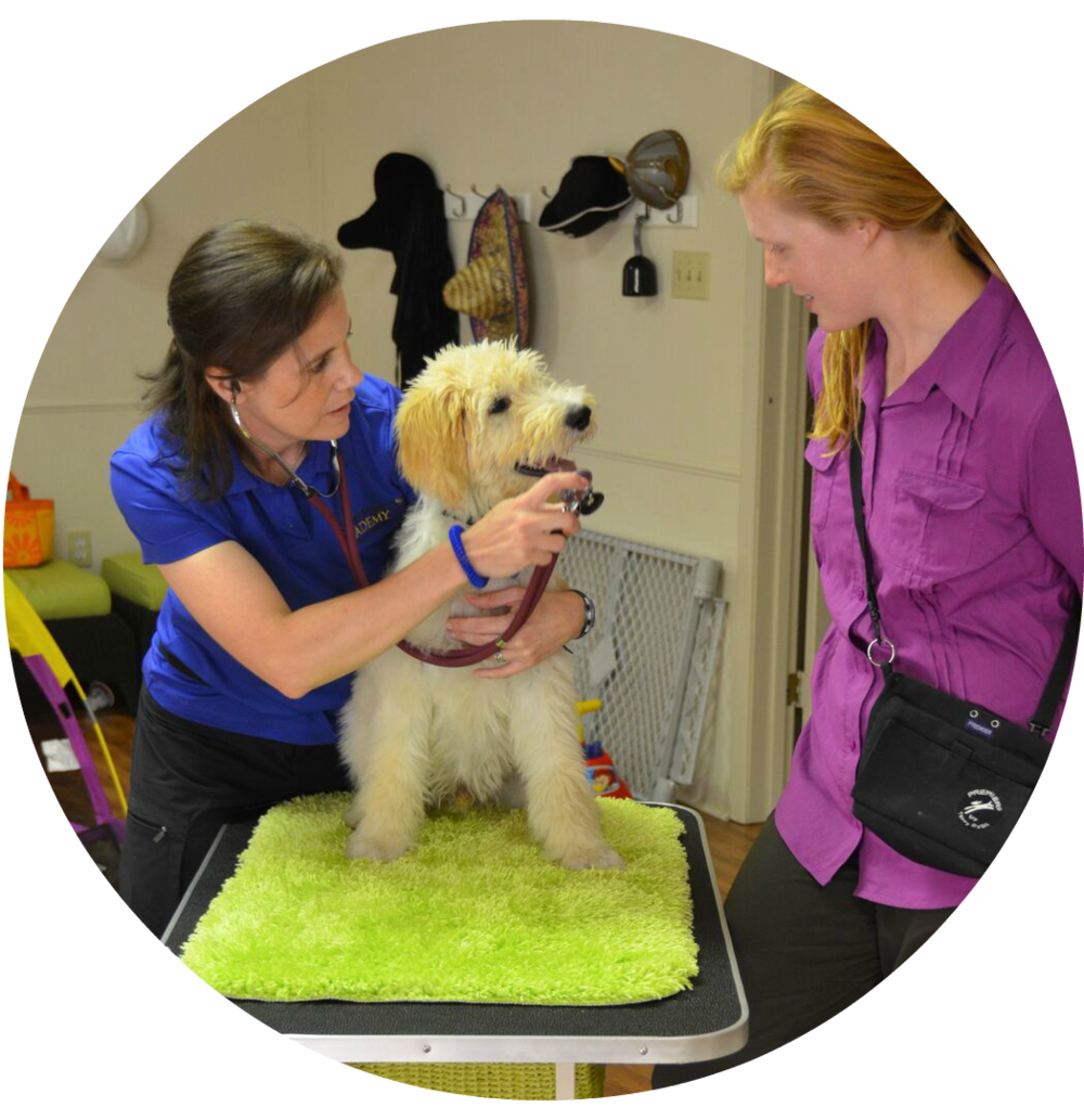 best puppy trainer curriculum