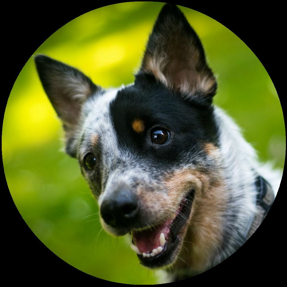 best puppy training classes