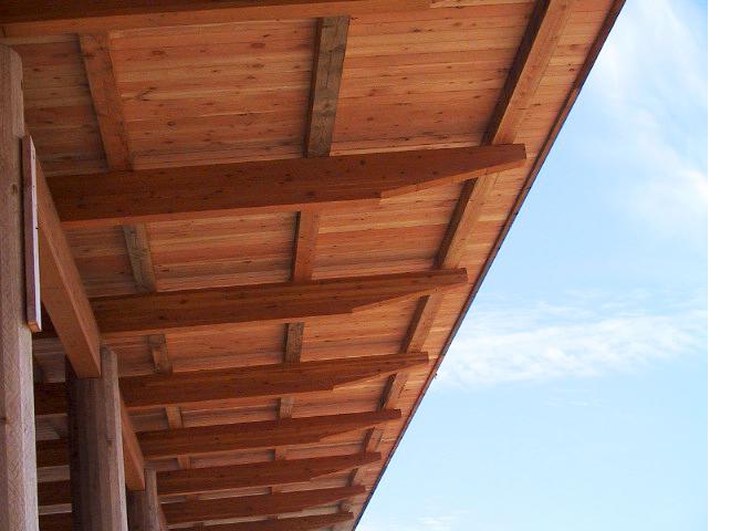 4 - Canopy Detail.jpg