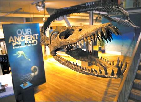 2 - Dinosaur Head.jpg