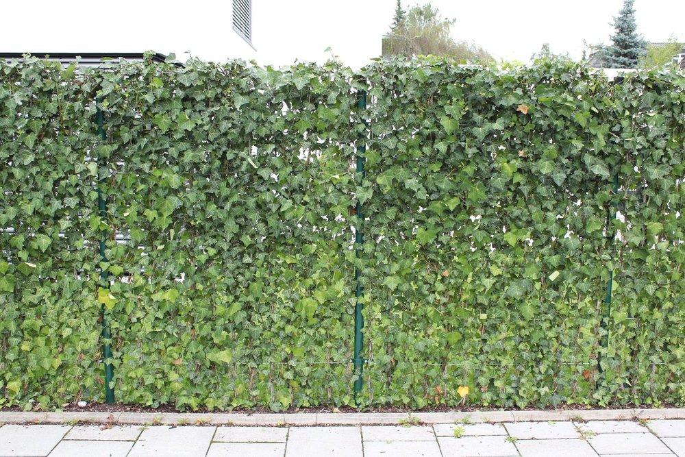 fencing with live vegetation