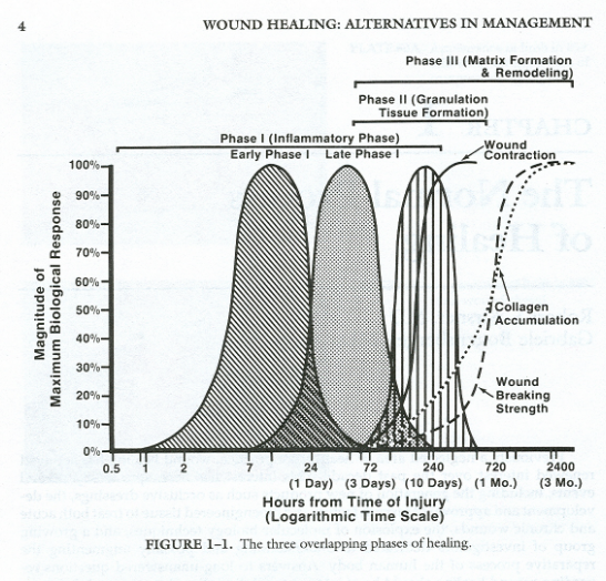 PHases of injury healing, From Daly TJ: The repair phase of wound Healing, re-epitheliazation and contraction. In  Kloth CL, McCulloch JM, Feedar JA (eds.): Wound healing: alternatives in management. philadelphia, FA davis, 1990, p 15.