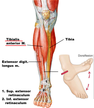 Running Technique 3 Reasons Why Runners Develop Shin Splints And 7