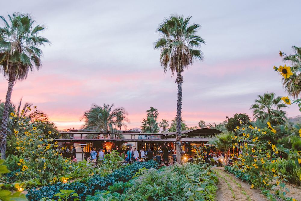 Flora Farms - The OG Cabo dining institution
