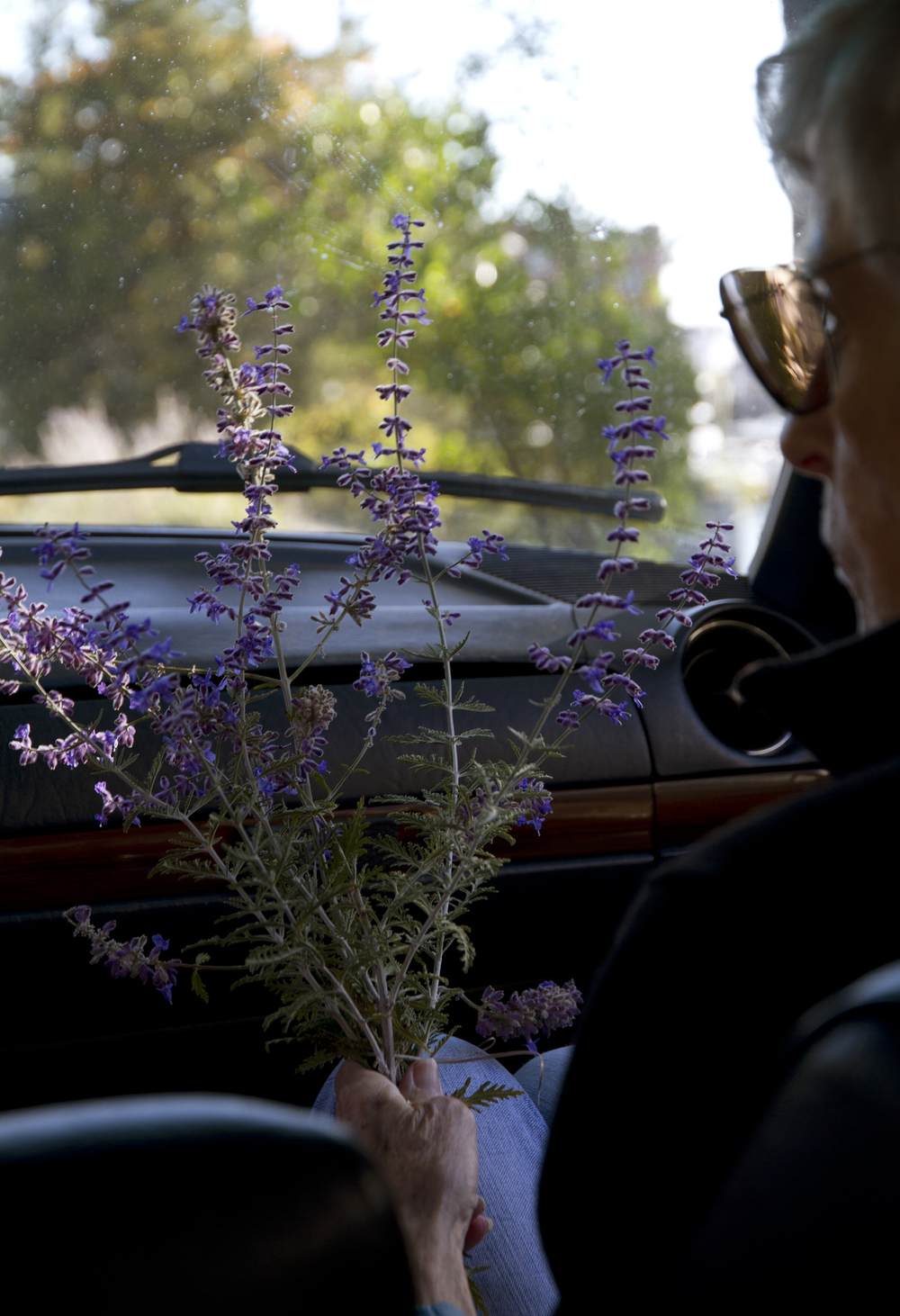 Jeanne and Her Lavender