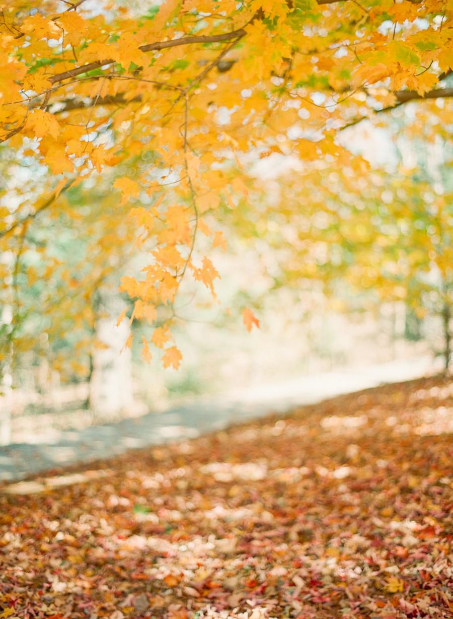 fall-1039.jpg