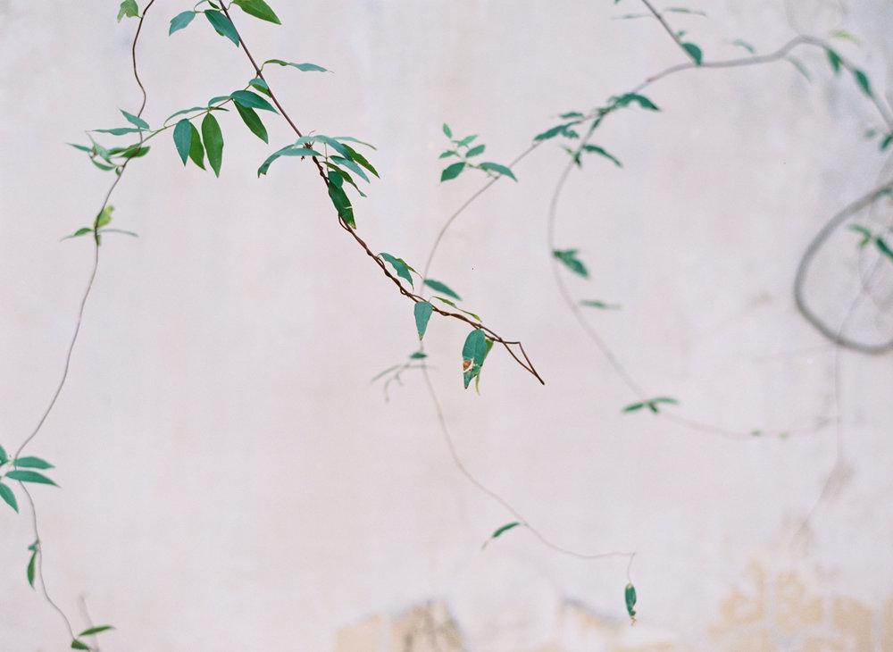 #Rosemary-1000.jpg