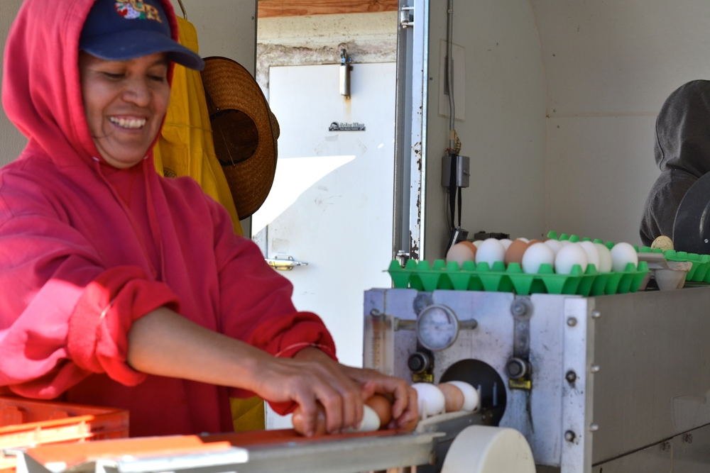 Eva washing eggs for market