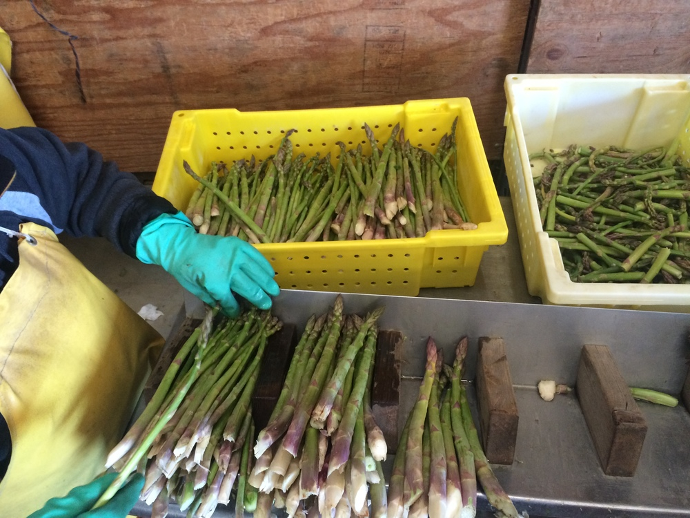 Packing asparagus