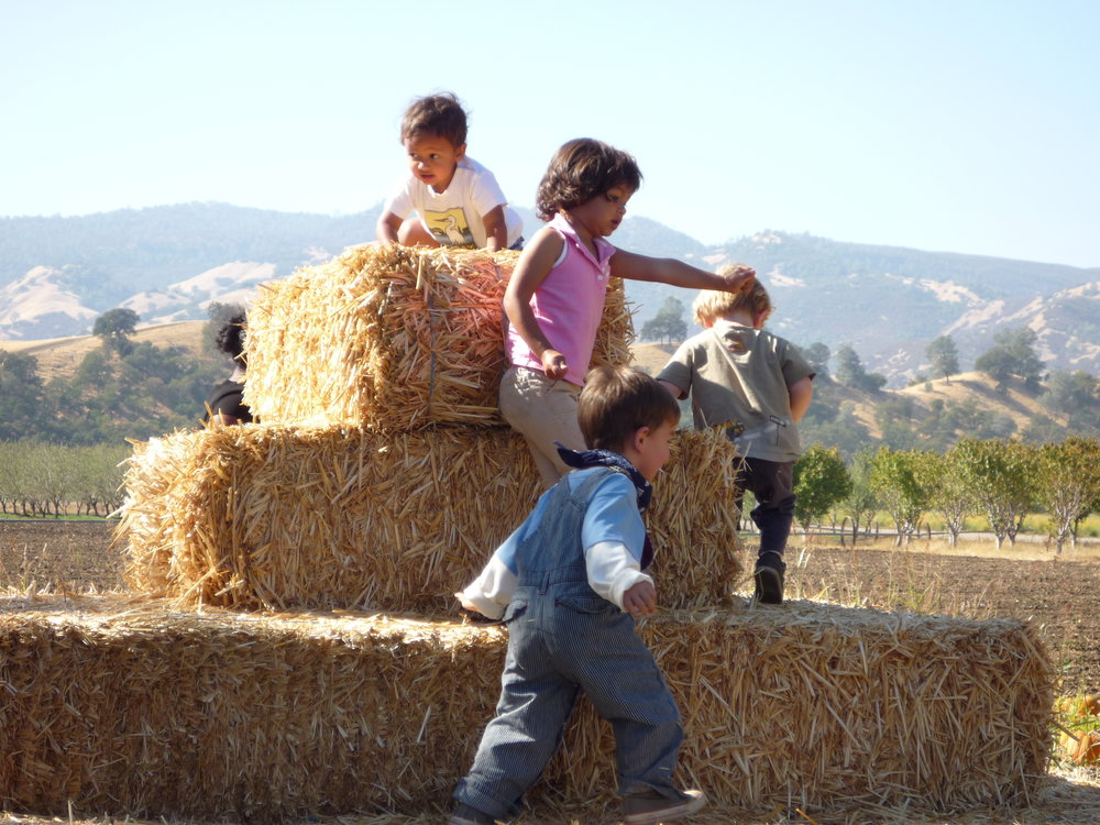 2018 Annual Riverdog Pumpkin Party - Saturday October 20, 201812:00 to 4:00 pm (potluck 12:00pm — 2:00 pm)11905 State Route 16, Brooks CA 95606Come to the farm and help us celebrate the fall harvest season.Bring a potluck dish to share, enjoy farm-grilled pork sausages, take a tour of the farm, feed the pigs, and pick a pumpkin to bring home.We will provide grilled sausages and ice cold water.RSVP by 10/15/18 with the number attending: csa@riverdogfarm.com or 530-796-3802