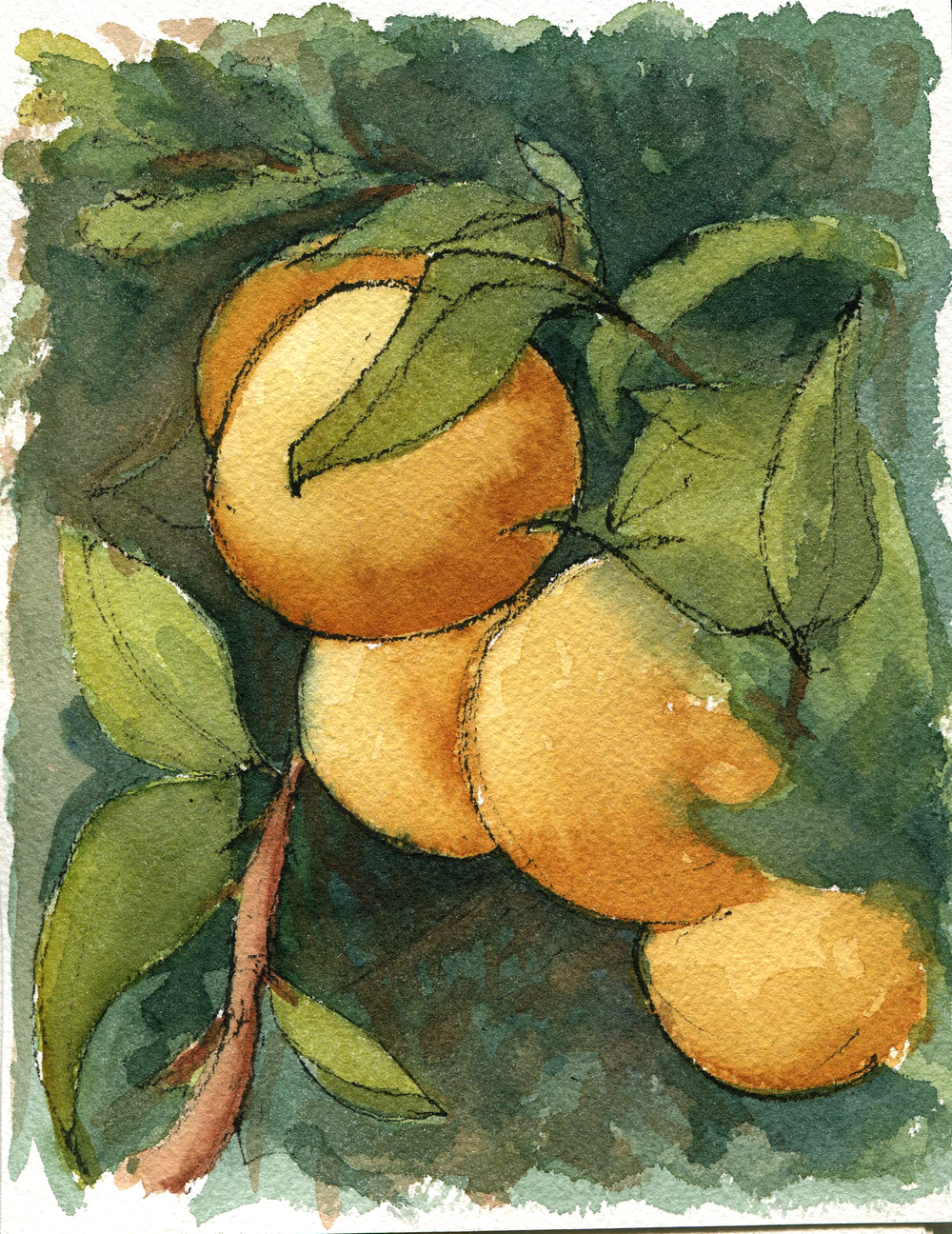 Watercolor sketch of oranges on the vine