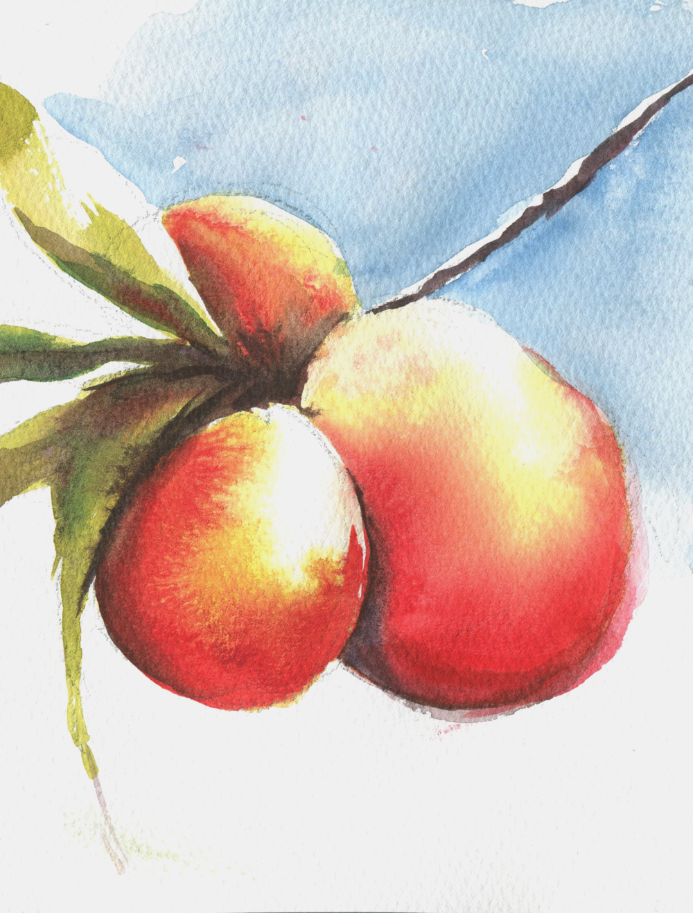 Peaches in watercolor