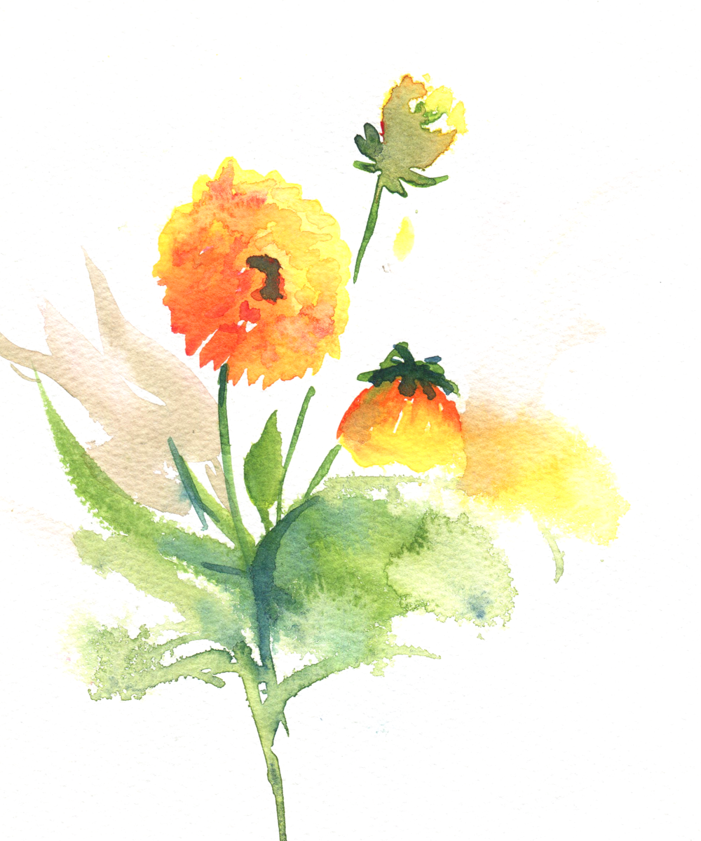 floral study