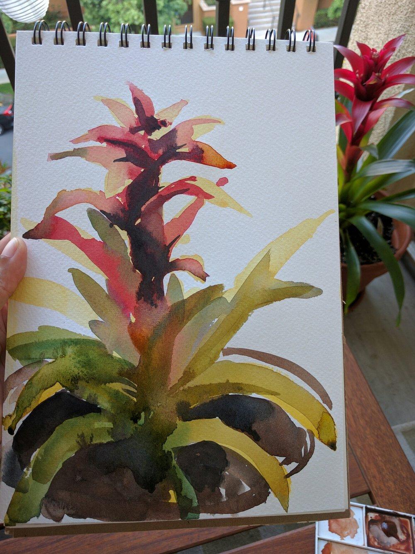 Bromeliad Study