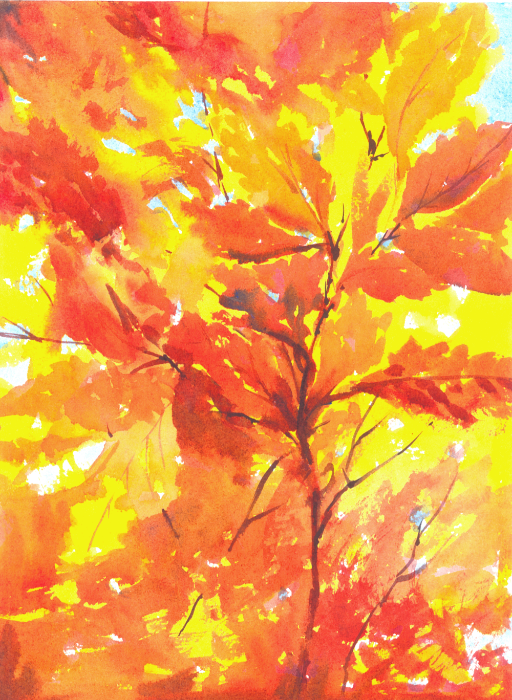 autumn leaves in the sun.png