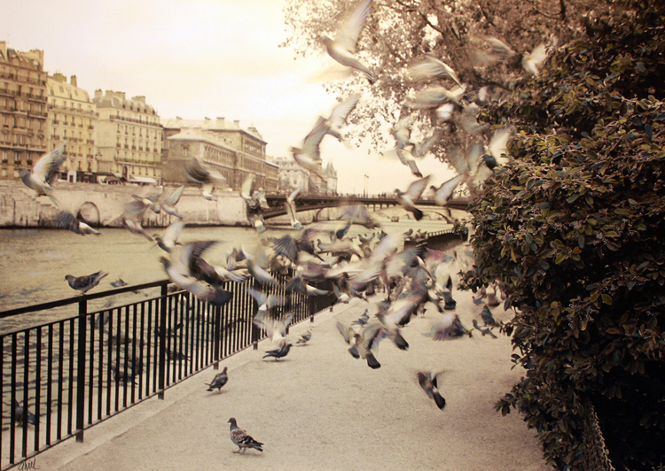 Birds of Paradise Paris.jpg