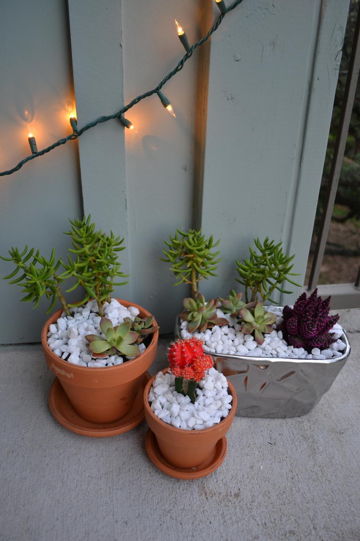 succulents-cactus-planter-diy-thekini