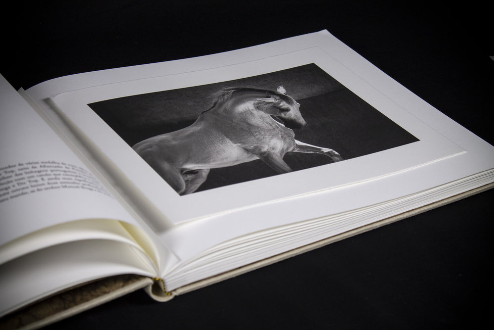 13_Lusitano.jpg