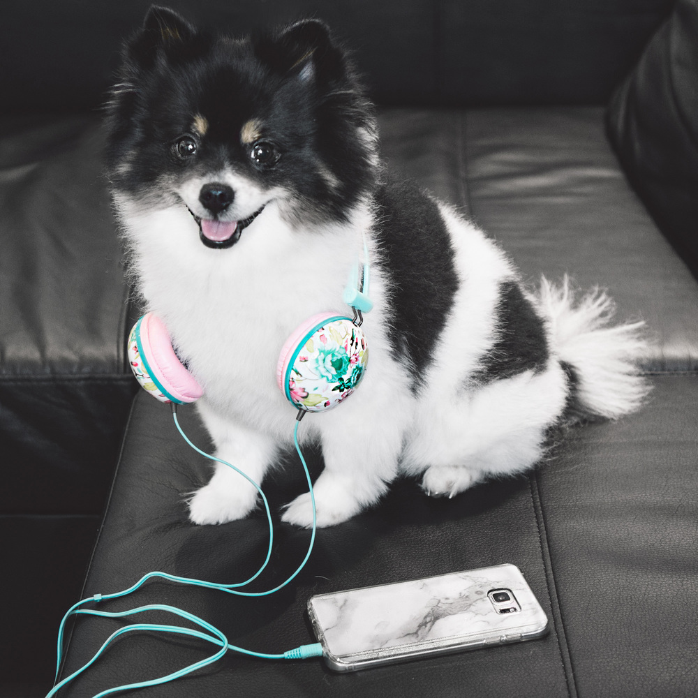 We adore these floral headphones for many reasons. Apparently our pup, Layla happens to love them as well.