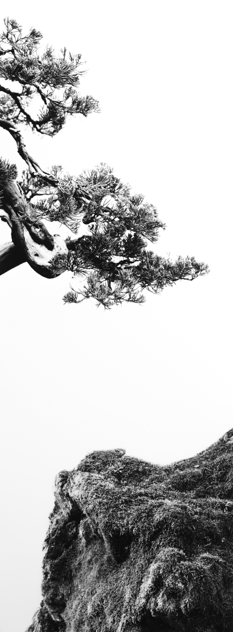 Juniper Moss.jpg
