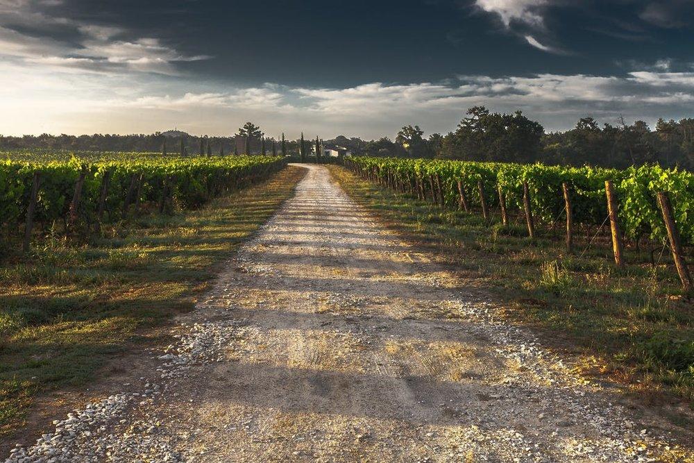 Vineyard-dirt-road.jpg