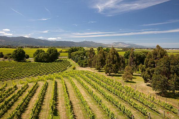 New-Zealand-Wine-Region-small.jpg