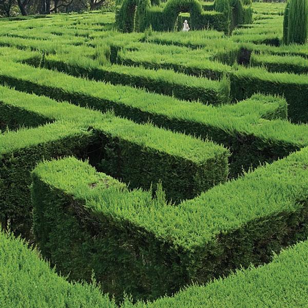 hedge-maze.jpg